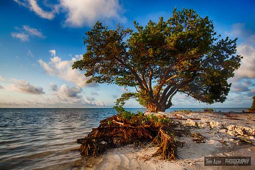 ocean tree beach water clouds sunrise keys landscape coast sand florida cloudy tide shoreline roots mangrove shore tropical islamorada hdr floridakeys saltwater maritimeforest 2exposures annesbeach lowermatecumbekey nikdfine timazar hdrefexpro2 anneeaton