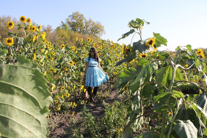 thriftaholic_sunflower_field_2