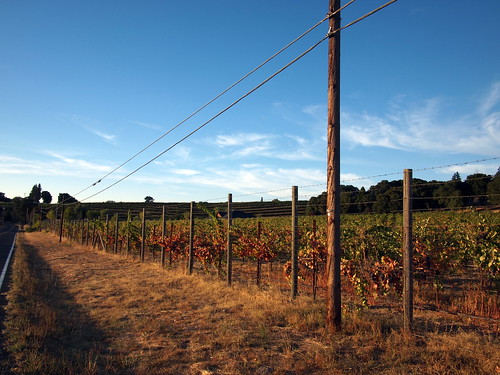 Vineyard on Old River Road