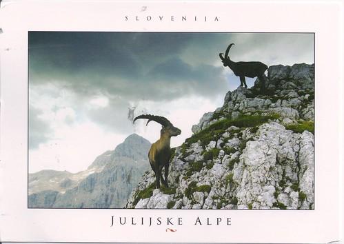 Slovenia Capricorns