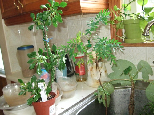 Weirdest Looking Plants: weird plants to grow indoors