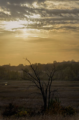 Dead Tree_41349_.jpg by Mully410 * Images