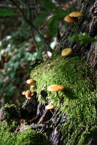 Mushrooms VII