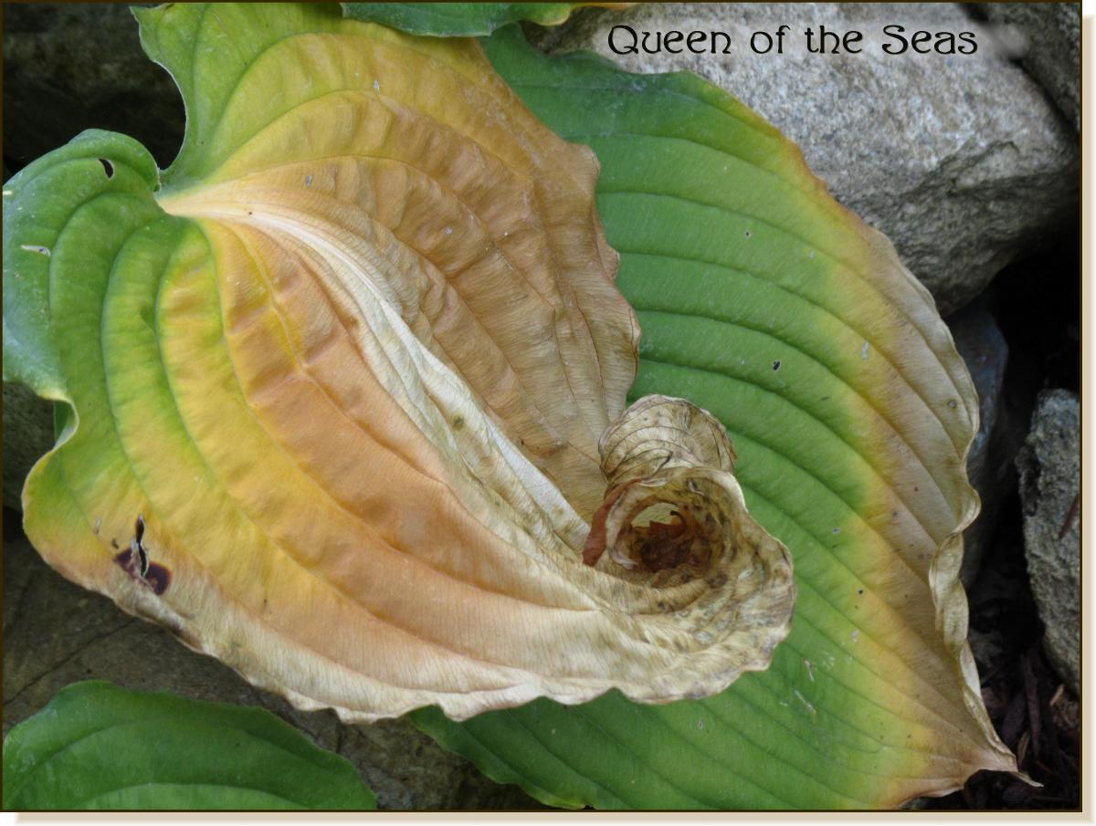 Queen of the Seas 2012 fall