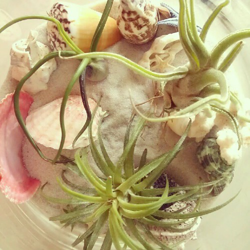 Mini airplant #garden