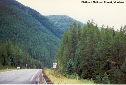 Flathead County MT