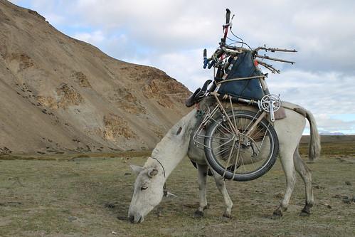 'Bikes' the mule