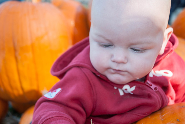 1210_PumpkinPatch_59.jpg