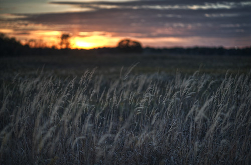 [Free Images] Nature, Grassland / Grass, Sunrise / Sunset ID:201210152000