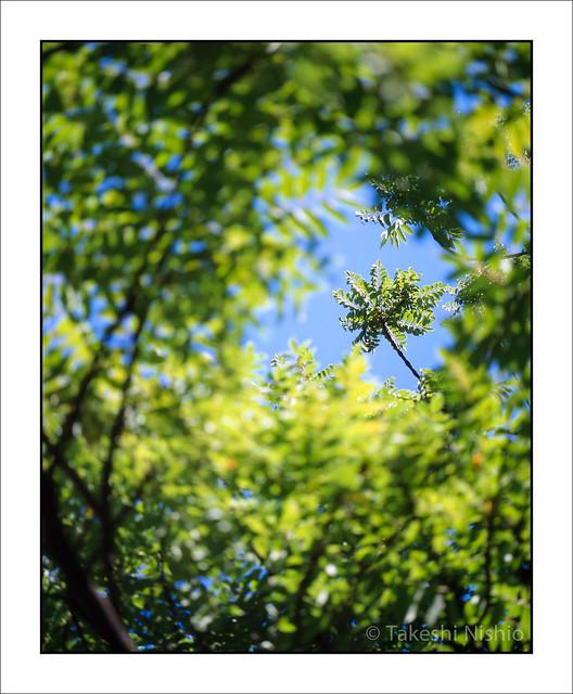 上の方の枝 / Upper Branch