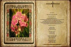 Lectura Carta de San Pablo a los Efesios 3,14-21. Obra Padre Cotallo