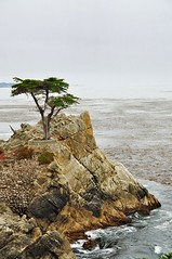 17 Mile Drive, Old lone cypress tree