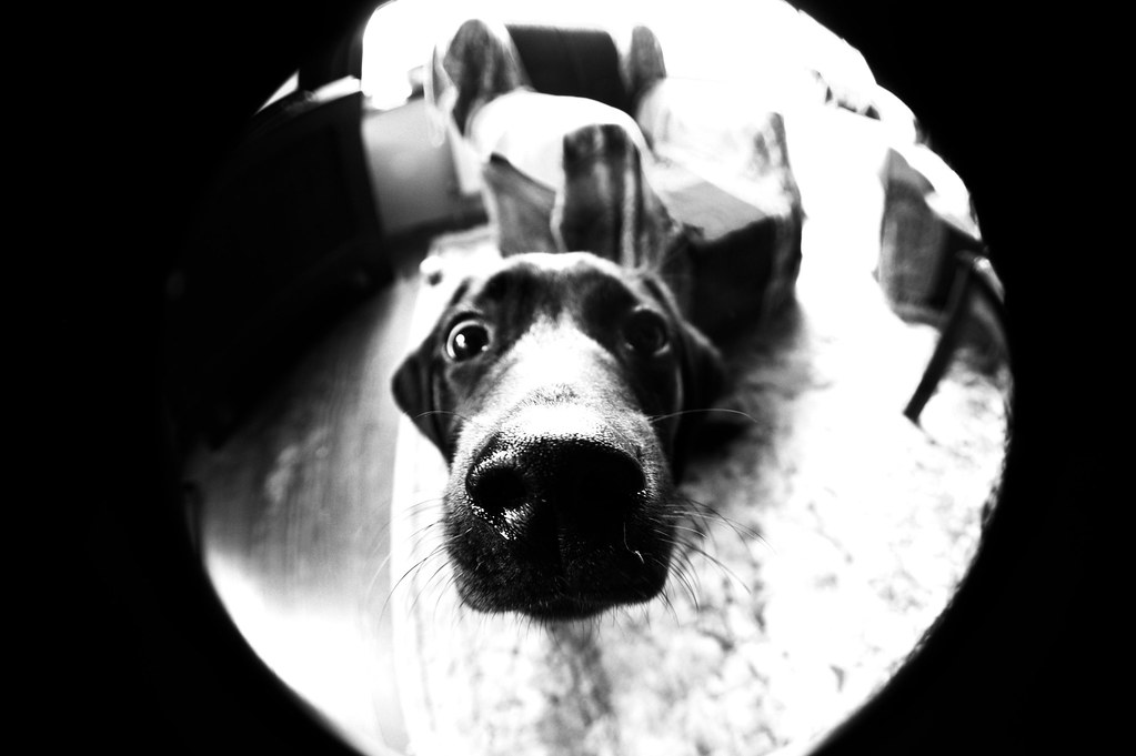 Juno's Nose