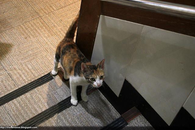 Noryangjin - Meow!