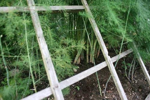 september asparagus 037