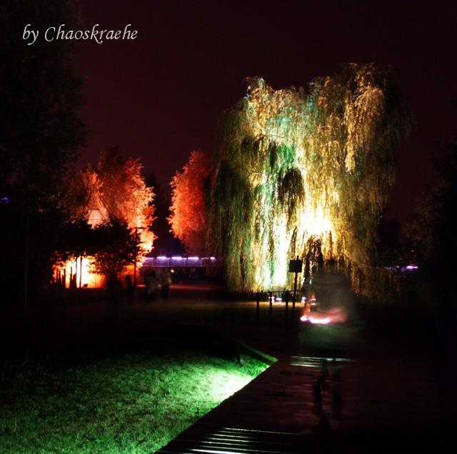 leuchtende Bäume 02