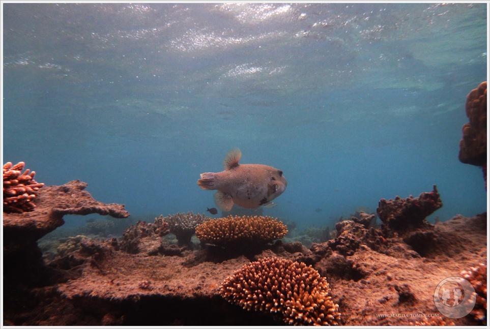 2012 07 23_Magda i Tomek Dookola Swiata_Fiji_P1040834