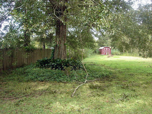 Backyard After Isaac