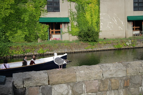 A boat passing by the Otaru canal