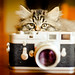 Photographer by RocketDog1170