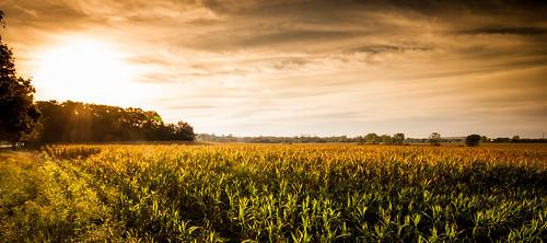 sunrise canon illinois corn cornfield bartlett 500d t1i kevinrodde kevinroddephoto kevinroddephotography