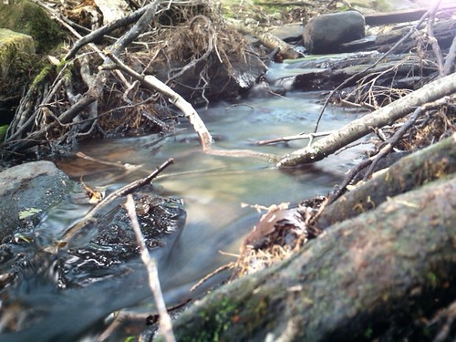 forest stream narrowsburg waynecounty barkleylake waynecountypa narrowsburgny campstbasil barkleylakepa campsaintbasil