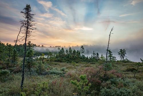 amherst newhampshire sethjdeweyphotography bog dawn mist morning sunrise