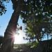Spider soaking up sunshine - Explore by Bennilover