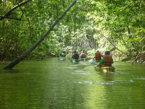 Mangrove Exploring, Osa Peninsula