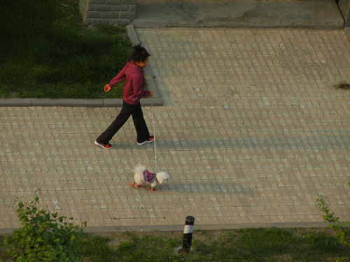 Woman Walking her Dog in Shenyang, China _ 9410