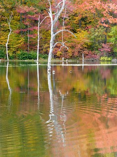 Ripples in Autumn Reflection