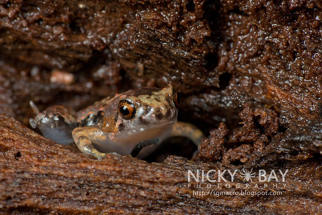 Frog - DSC_9900