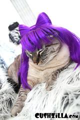 Kitty in a purple Gaga wig
