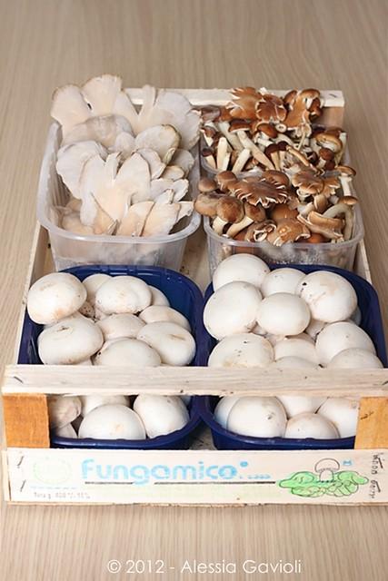 Funghi Coop. Agr. Fungamico