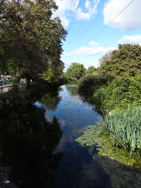 Section of the River Lea