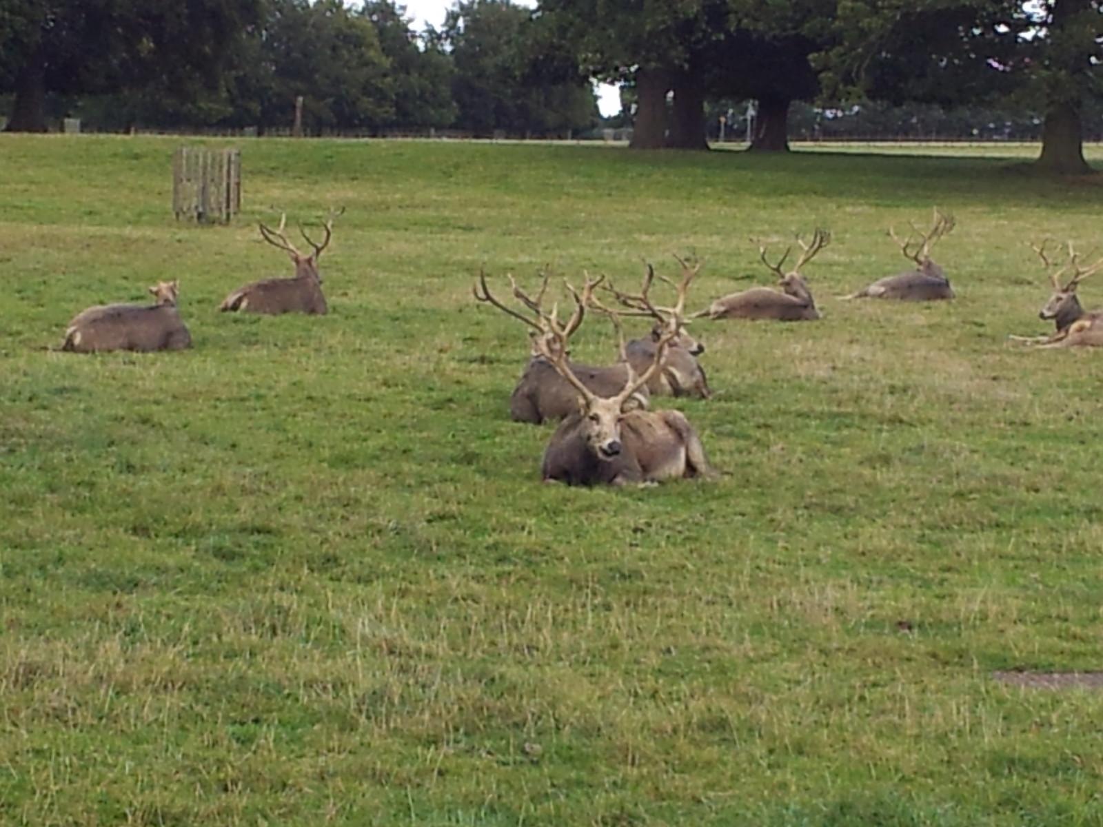 2012-09-29 14.51.33 Resting Deers