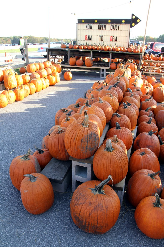big_pumpkins