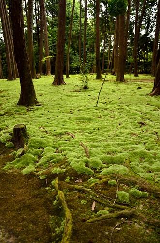 Carpet of moss in Toshodai-ji Temple.