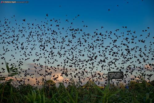 Flocks 2 by Stefano Agati