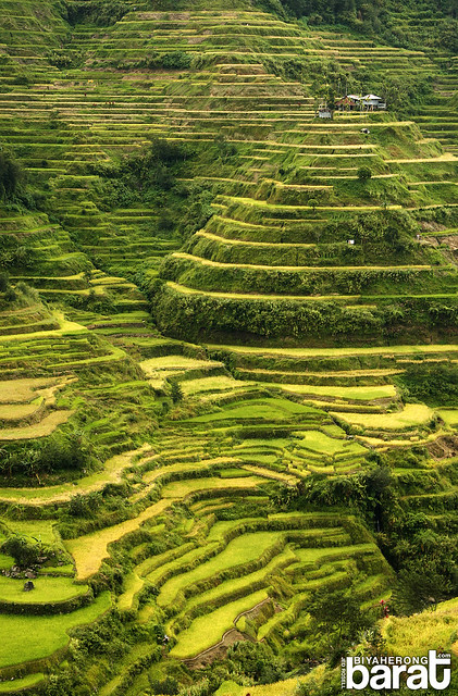 banaue rice terraces ifugao