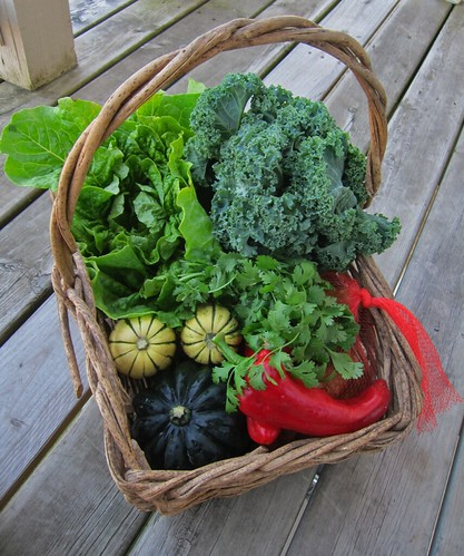 Basket full of veggies. A huge head of lettuce and a large bunch of curly kale are particularly prominent, along with some acorn and delicata squash.