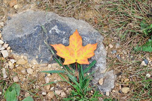 First Fallen orange Leaf of the Year
