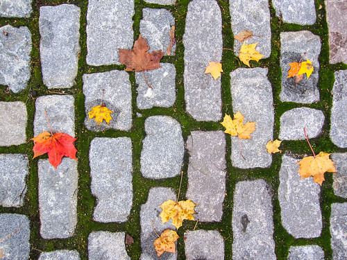 Leaves on the rocks