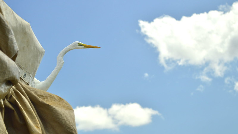 heron on the roof