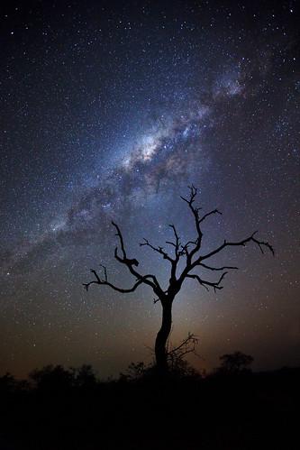africa tree silhouette night stars landscape southafrica safari afrika astronomy rsa mpumalanga milkyway gamedrive timbavati starfield republicofsouthafrica motswari timbavatiprivatenaturereserve greaterkrugernationalpark motswariprivategamereserve