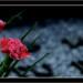 Flores.... flores para los muertos