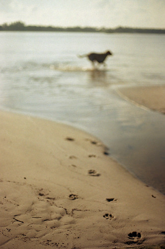 film beach analog canon vintage 50mm lab labrador yellowlab florida pawprints intercoastal ftb fd kodakgold intracoastal canonftb freefilmimages freefilmpictures