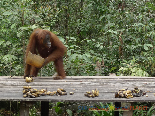 Orangutan World, Tanjung Puting Borneo Adventure-197.jpg