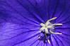 El centro de la flor......