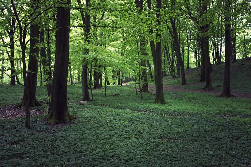 Den skånska bokskog
